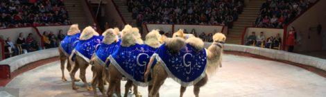 Измайловцы в Цирке на Фонтанке