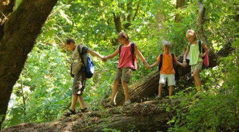 О правилах поведения в лесу