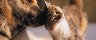 Памятка для владельцев домашних животных