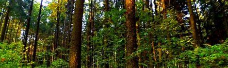 О бережном отношении к лесу
