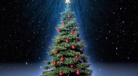 Как выбрать безопасную новогоднюю ёлку