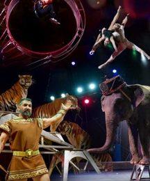 """Приглашаем юных измайловцев и их родителей побывать на прекрасном представлении Цирка на Фонтанке """"Итальянский цирк Togni"""""""