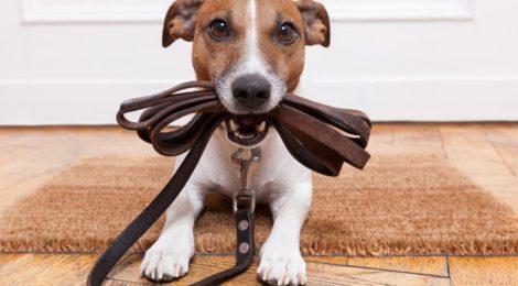 Информация для владельцев собак. Правила содержания собак в Санкт-Петербурге.